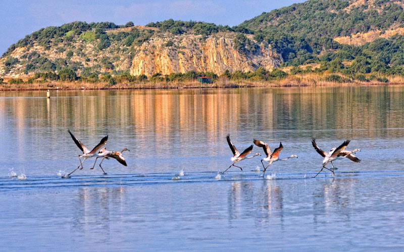 Gialova lagoon (20 min)